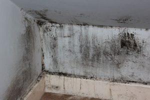 Anche i muri fanno la muffa