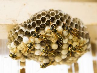 Nidi di vespe: come toglierli