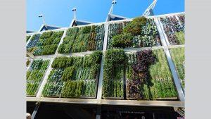 Case più verdi coi giardini verticali